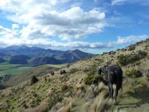The Hurunui Gorge Rapid (1/2 day)